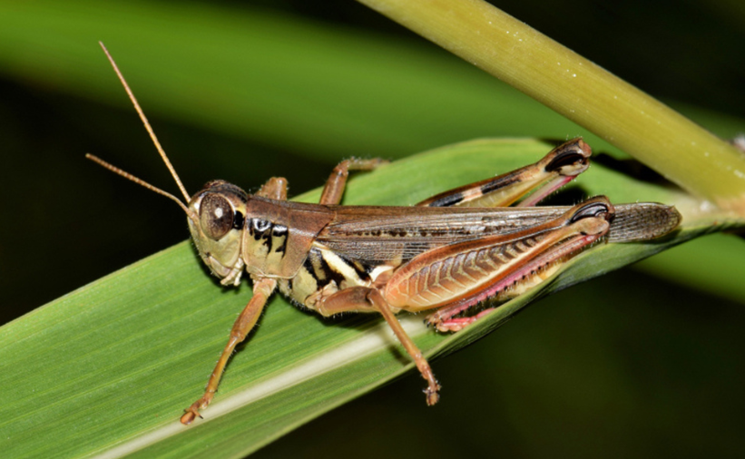Killing insects before monsoon crucial to halting second wave of Covid-19